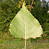 Explore Leaf Shape